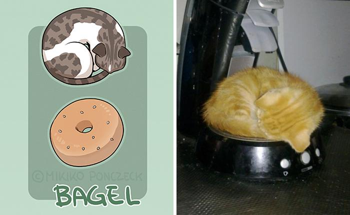 gato rosquilla - ilustraciones de mikiko