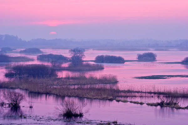 The Biebrza Marshes at sunset. These marshes are famous for their birdlife. Photo by: Lukasz Mazurek.