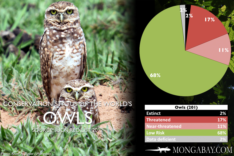 Owl Identification Chart