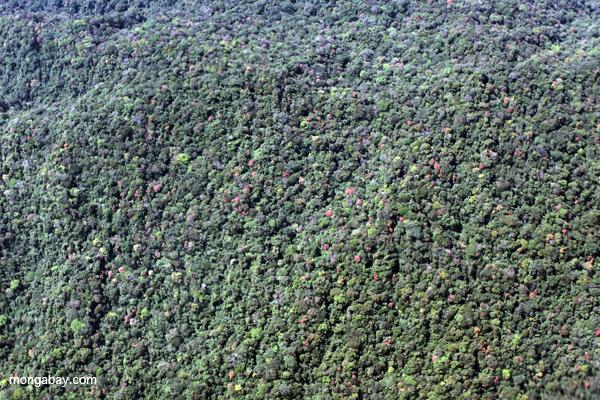 High biodiversity submontane forest of the Peruvian Amazon. Photo by: Rhett A. Butler.