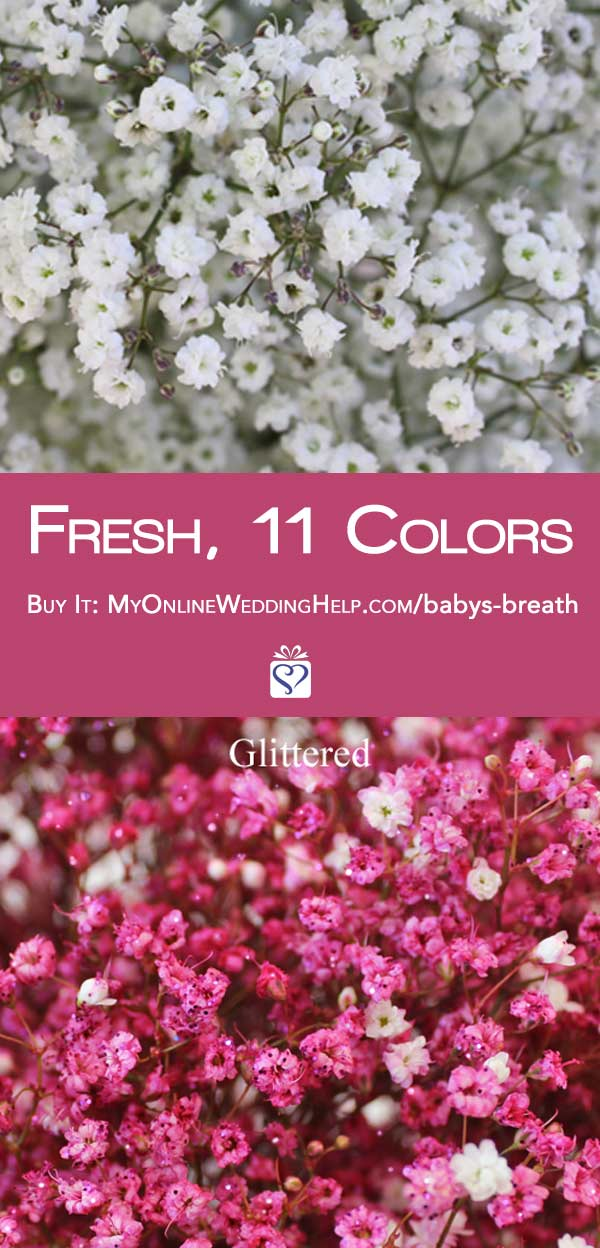 Fresh, not dried baby's breath takes your DIY wedding flowers to a whole new level. You can buy these bunches in your choice of type and colors. Nice for budget wedding decorations, bouquets, and centerpieces. Learn more or buy through the first listing on the page. In the My Online Wedding Help products section. #MyOnlineWeddingHelp #BabysBreath #BudgetWedding