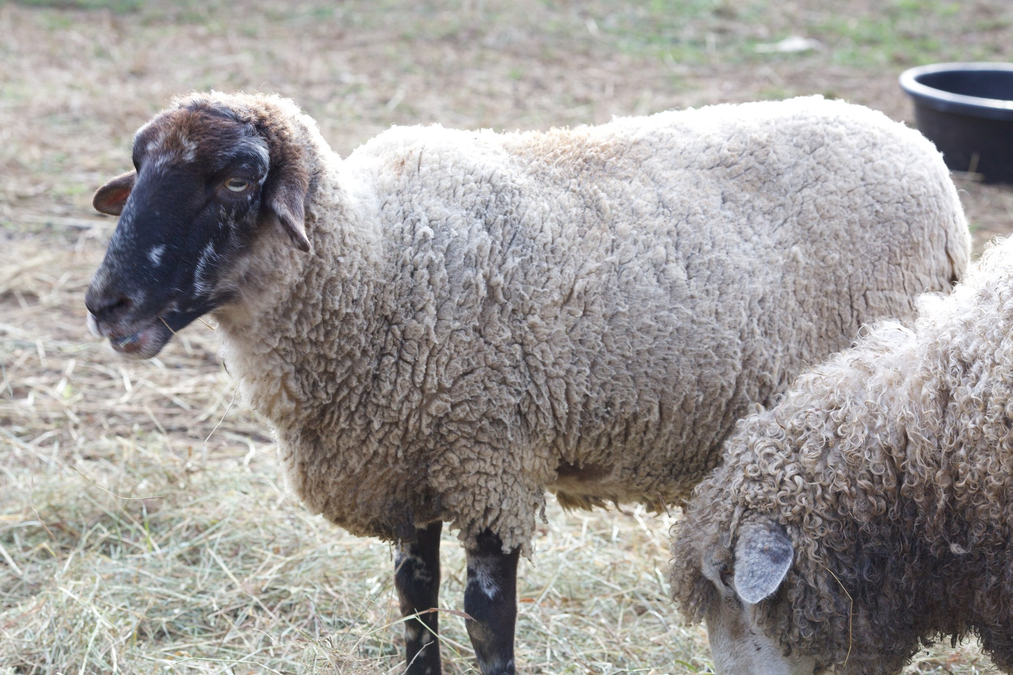 The Animals On Washington S Farm George Washington S