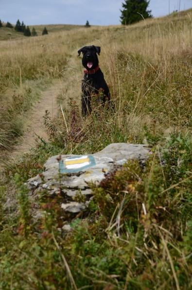 Bona was the trail guide