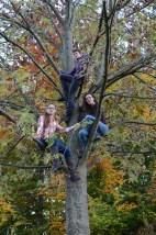 family-in-tree