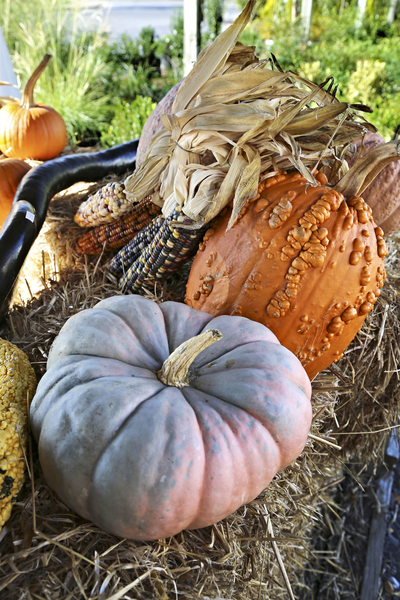 Create A Festive Porch This Fall With Pumpkins And Gourds