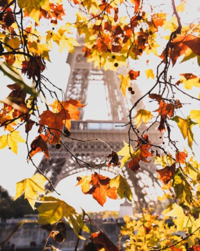 Autumn leaves in front of the Eiffel Tower