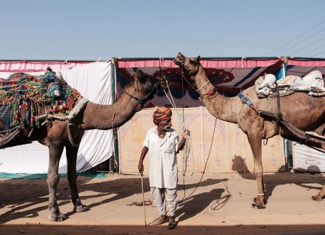 A man with his camels at the Pushkar Fair in India