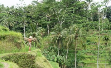 Man near rice terrace. Add Balinese rice dishes to your foodie's bucket list!