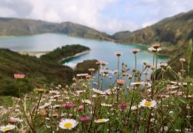 Flowers in the Azores, one of our budget spring break destinations for every traveler