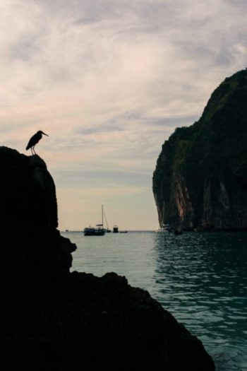 Sunset over Maya Bay with a bird in the foreground.