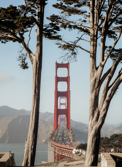 A view of the Golden Gate Bridge between two trees