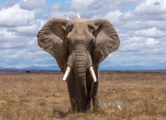 african safaris nam anh