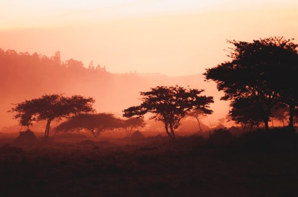 african safari maxime niyomwugeri