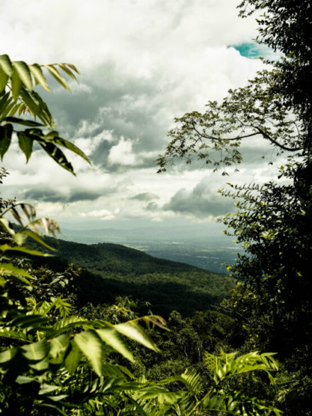 Forest and mountains in Chiang Mai