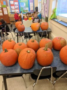Pumpkins ready for pumpkin math.
