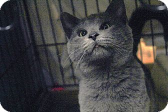 Cirrus is Part of a Happy Cat Adoption Story