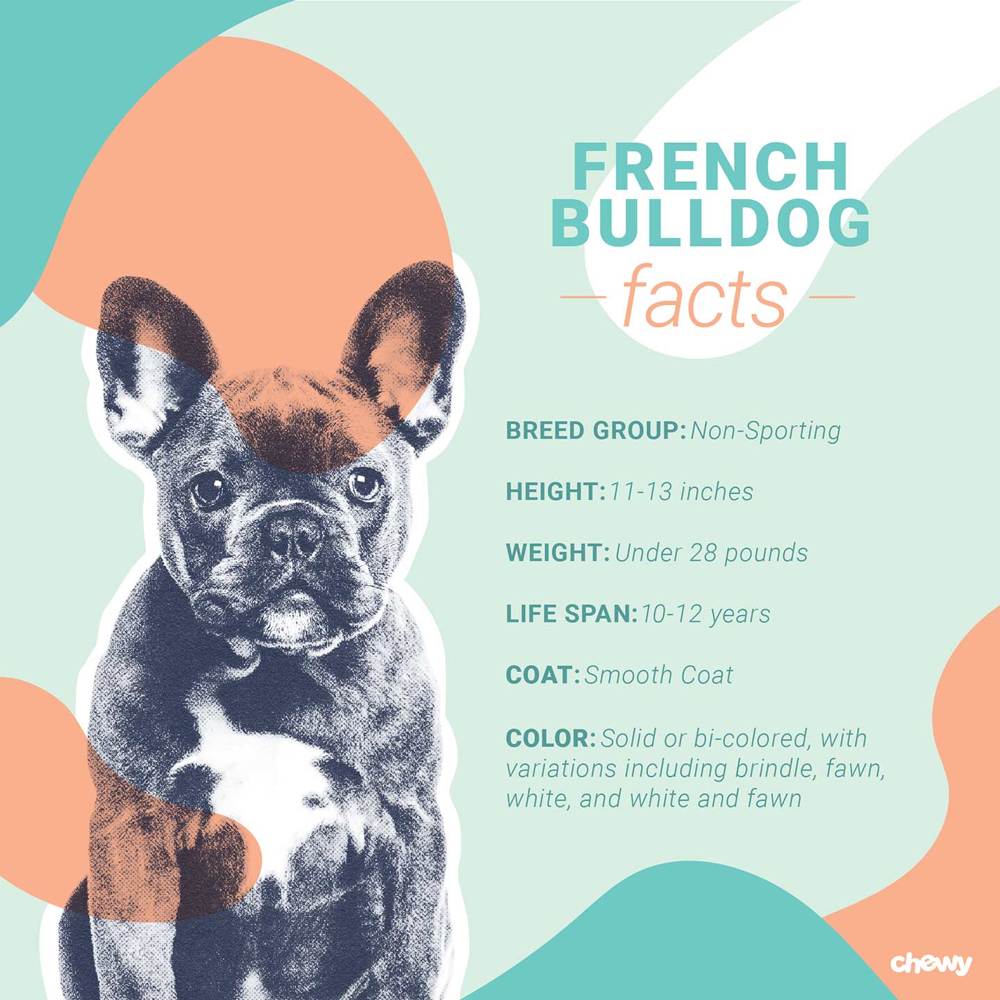 French Bulldog Dog Breed Facts Temperament And Care Info