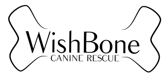 Pets For Adoption At Wish Bone Canine Rescue In Bloomington IL Petfinder