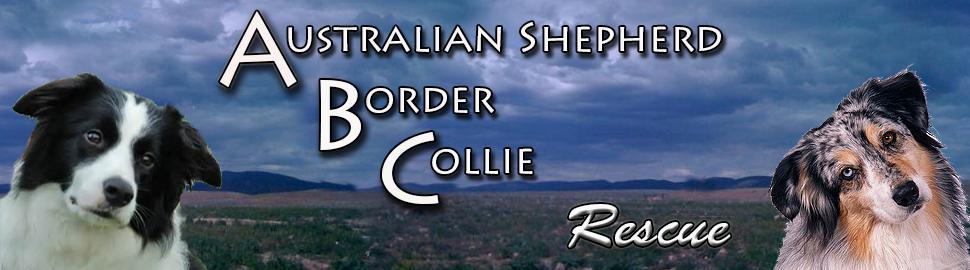 Shepherd Az Collie Rescue Australian Border
