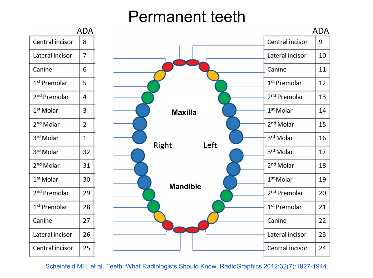 Teeth Numbering