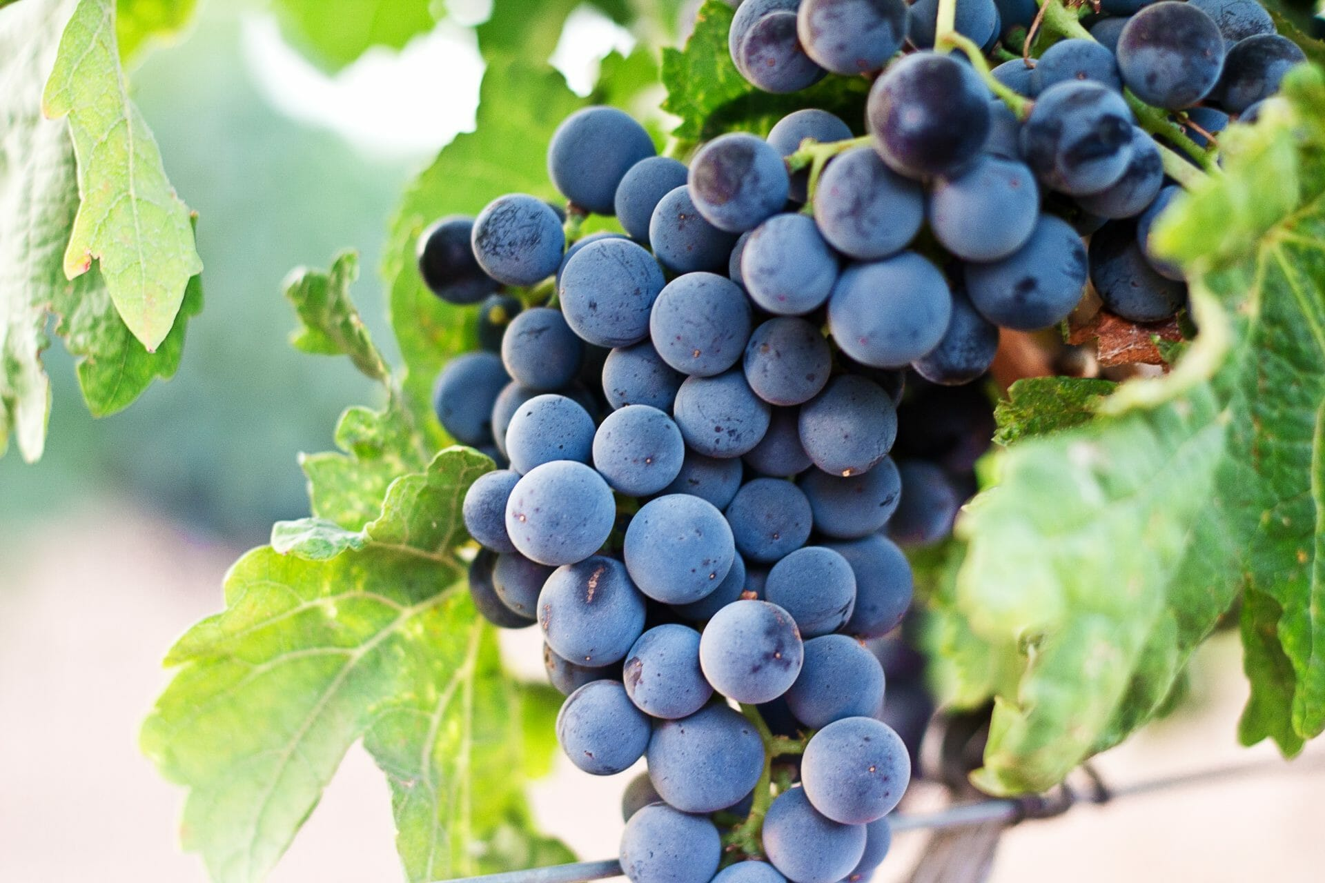 Picture of Grapes on a Vine for Real Estate News for Investors Podcast Episode #645