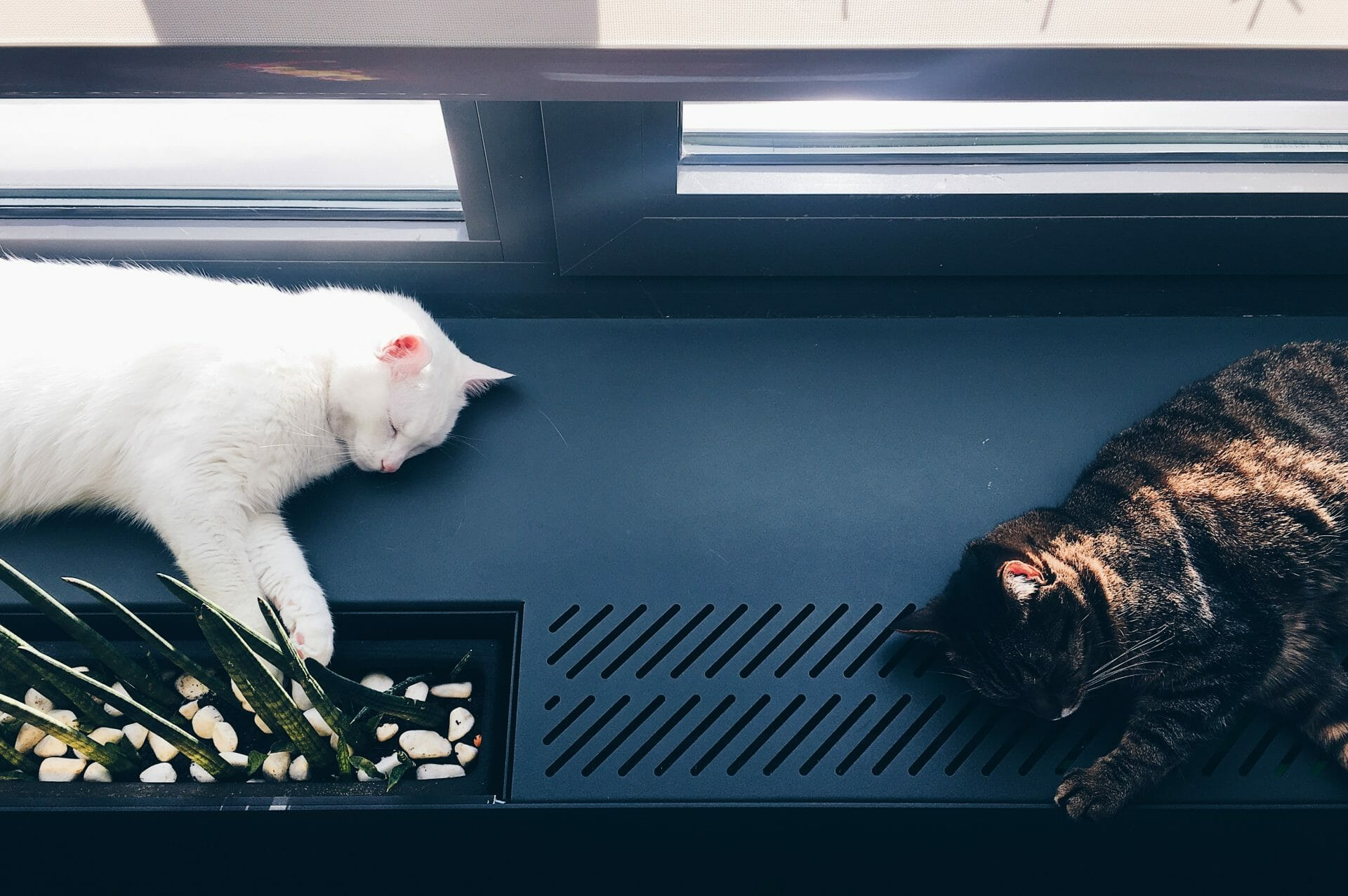 Image of Two Cats for Real Estate News for Investors Podcast Episode #672