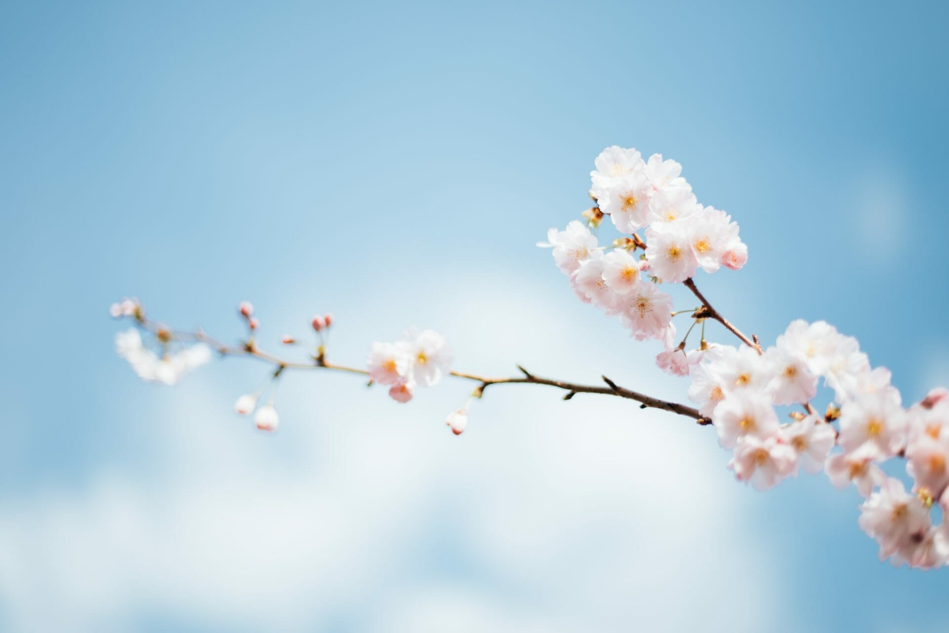 Picture of spring blossoms for Real Estate News for Investors Podcast Episode #740
