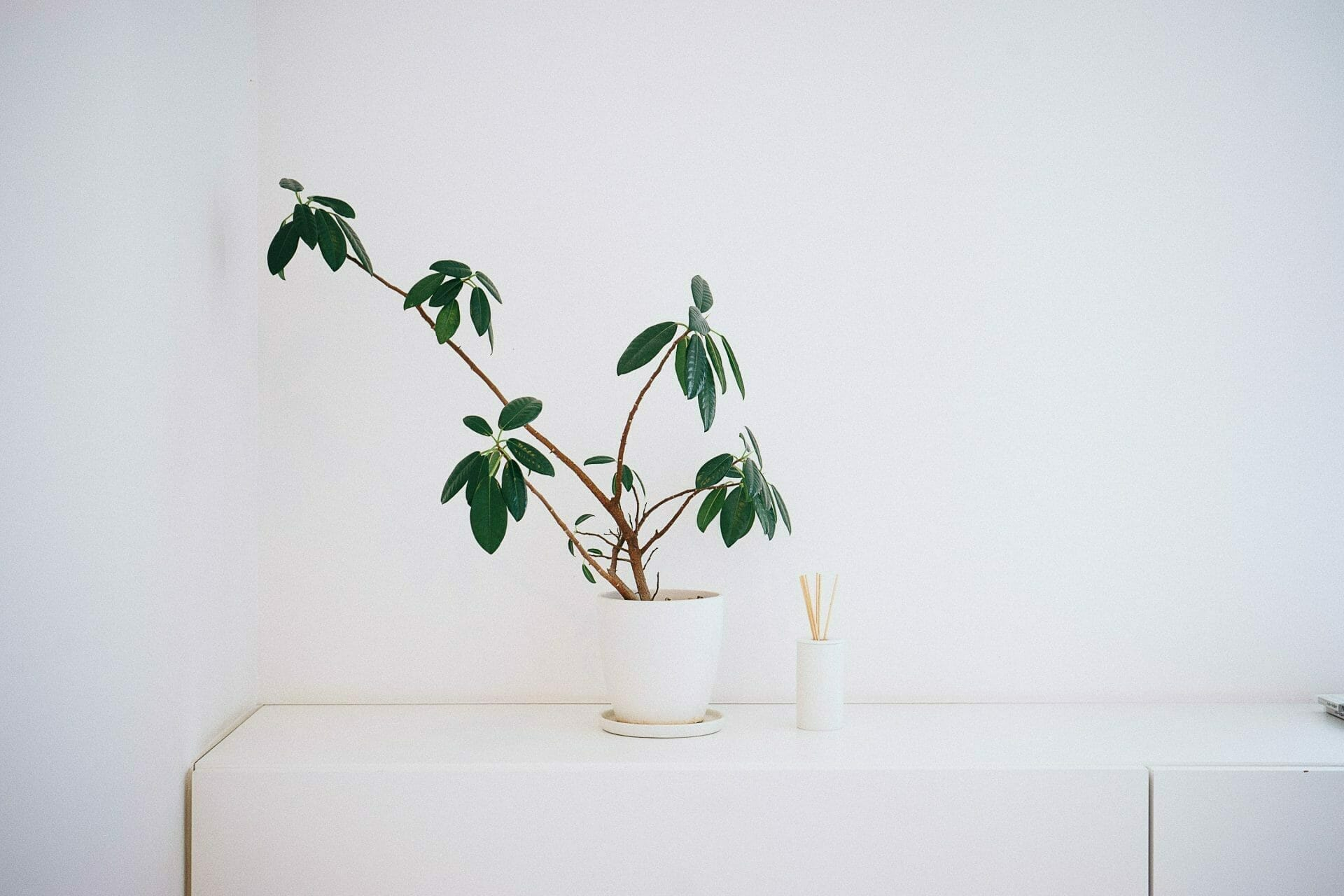 Picture of plant on table for Real Estate News for Investors Podcast Episode #780