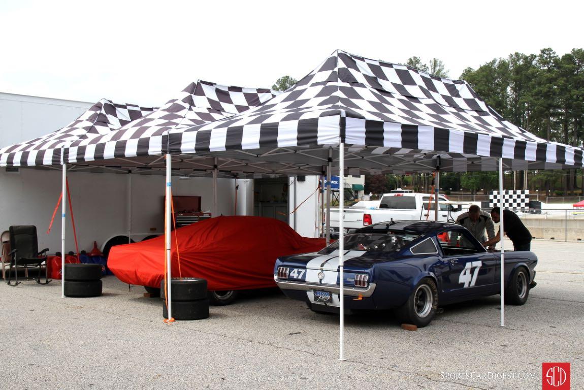 Mustangs in paddock