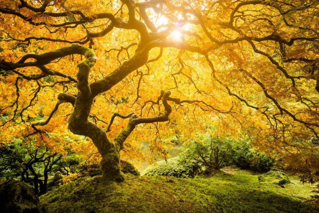 Spiritual Naturalism?