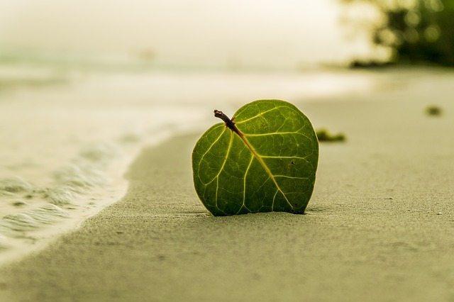 The Science Behind Spiritual Naturalism