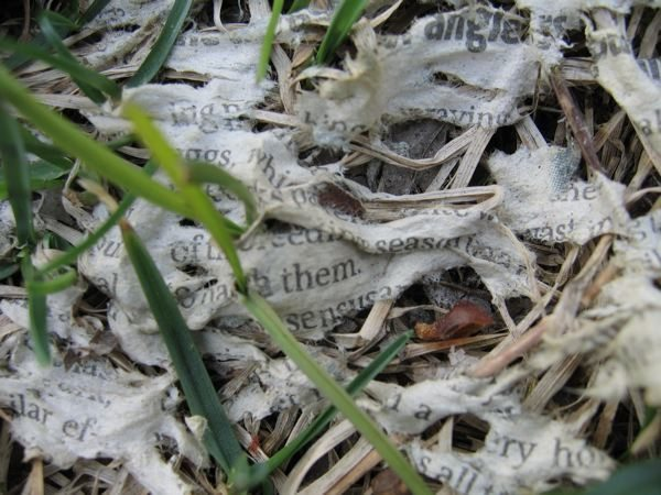 Newspaper decomposing in the grass