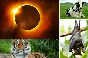 Efecto en los animales