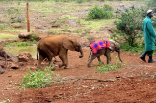 The elephants coming out to play at the Elephant Orphanage