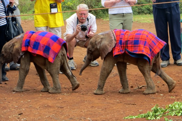 These elephants were about 4-5 weeks old.