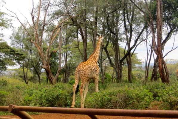 Bye Giraffe