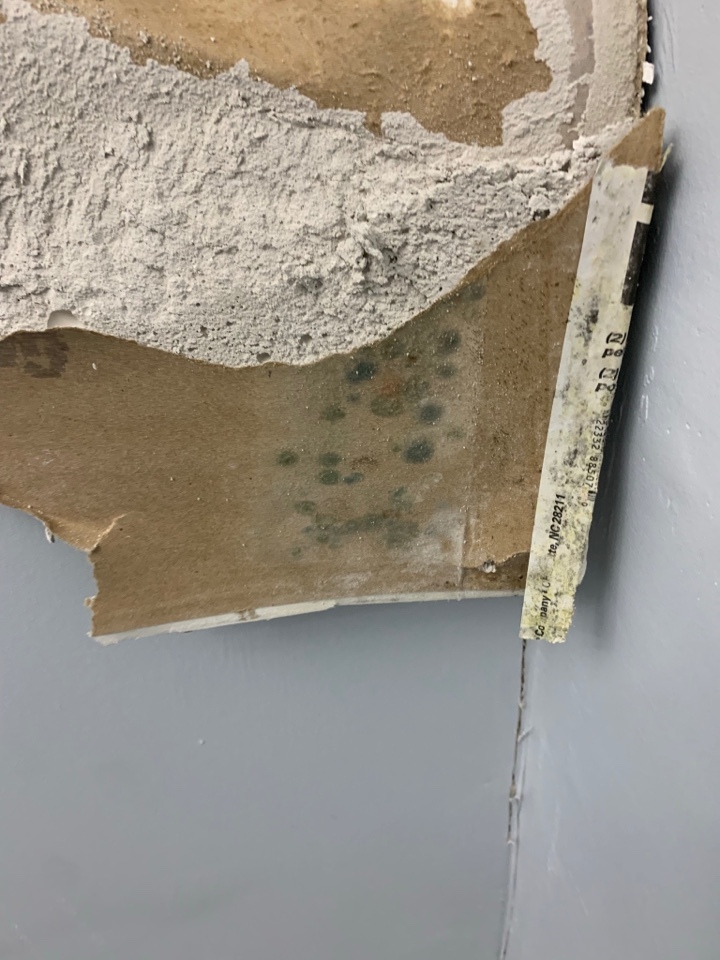 West Palm Beach, FL - Mold removal in progress by our expert techs