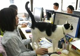 Empresa que permite gatos en el trabajo es increible