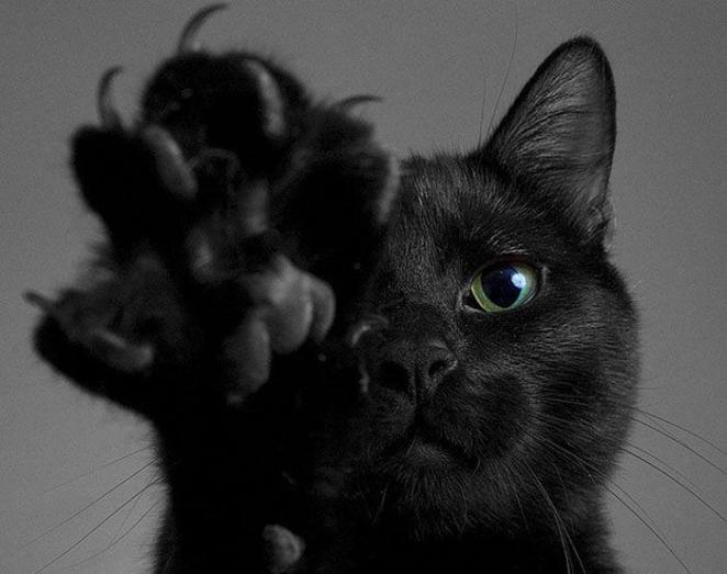 muestras de afecto de un gato