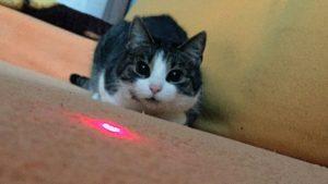 gatos siguiento el puntero láser