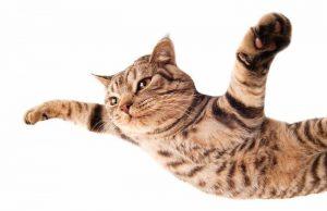 Qué es el síndrome del gato volador.