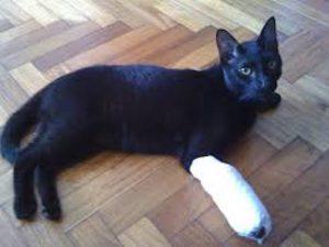 gato herido por síndrome de gato volador