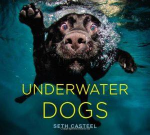 perros bajo el agua en Instagram