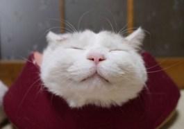 el gato dormilón y mas feliz del mundo