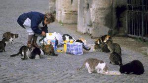 Anciana es condenada a prisión por alimentar gatos.