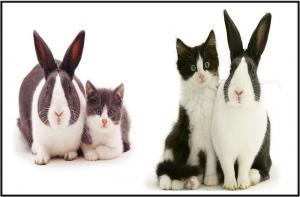 gatos y conejos que parecen hermanos