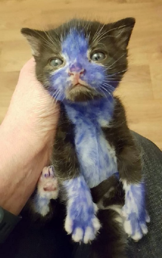 gente que hace cosas estúpidas - gato pintado de azul