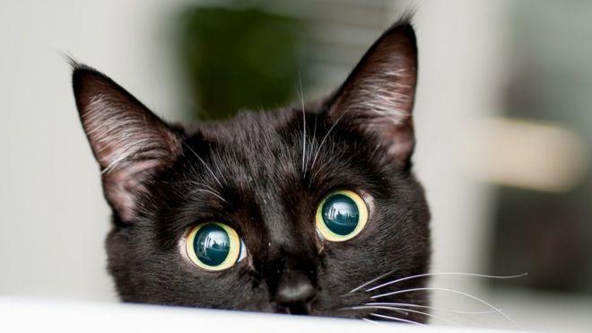 los gatos son seres espirituales - gato negro bonito