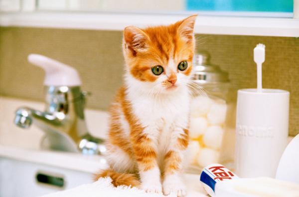 porque los gatos van al baño con sus dueños - gato en lavado de baño