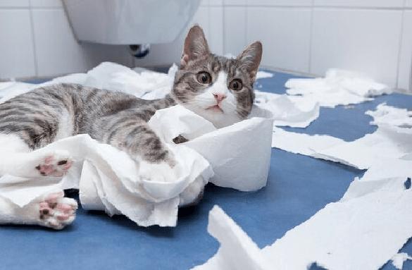 porque los gatos van al baño con sus dueños - gato jugando con papel higiénico